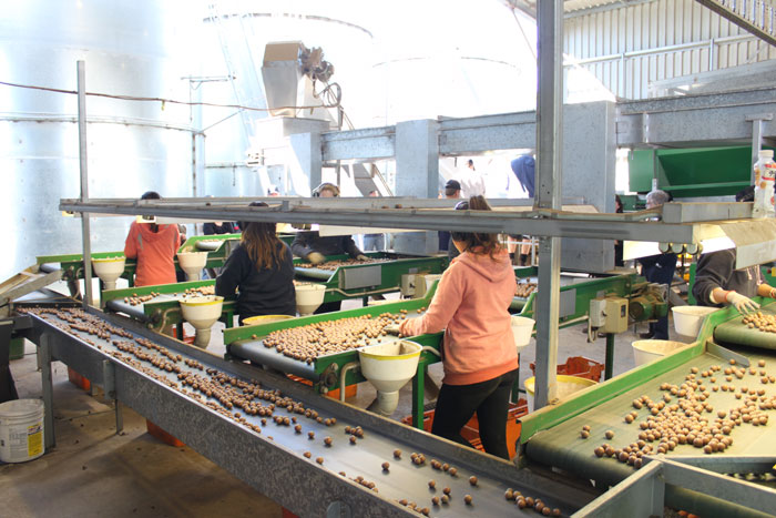 The dehusking and sorting shed at Hinkler park can process up to 100T on NIS per day