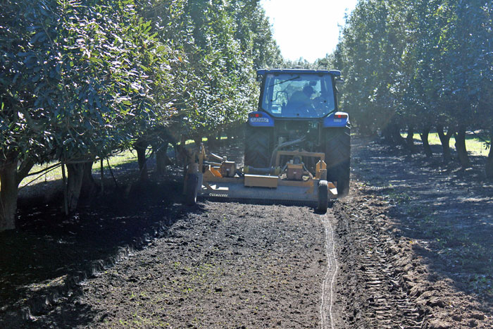 A soil profiler spreading mill mud from the inter row. The tree row has been hedged to allow access of the spreading trucks